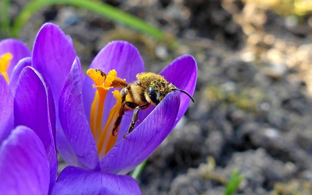 Insektenvortrag im Nachbarschaftstreff