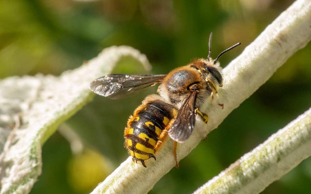 Rettet die Bienen ─ Vortrag im Nachbarschaftstreff Winterhalde